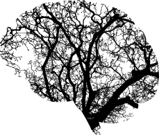 brain-2146817_960_720