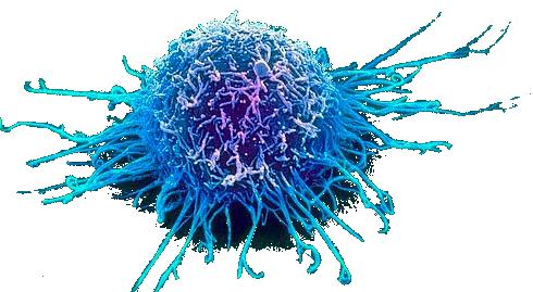 cellulecancer